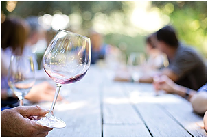 Beginner's Guide To Wine Tasting