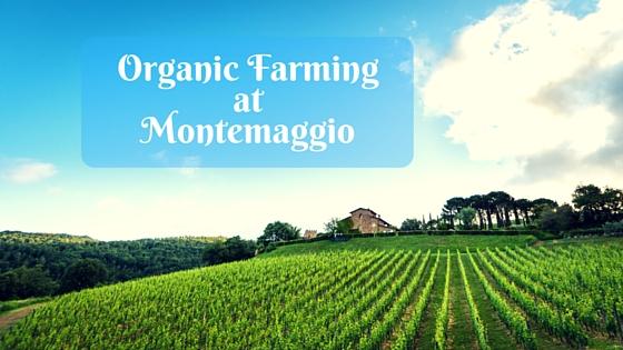 Organic Farming at Montemaggio