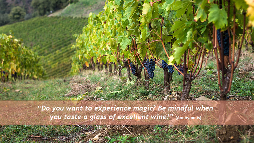 A mindful mind and a glass of wine!