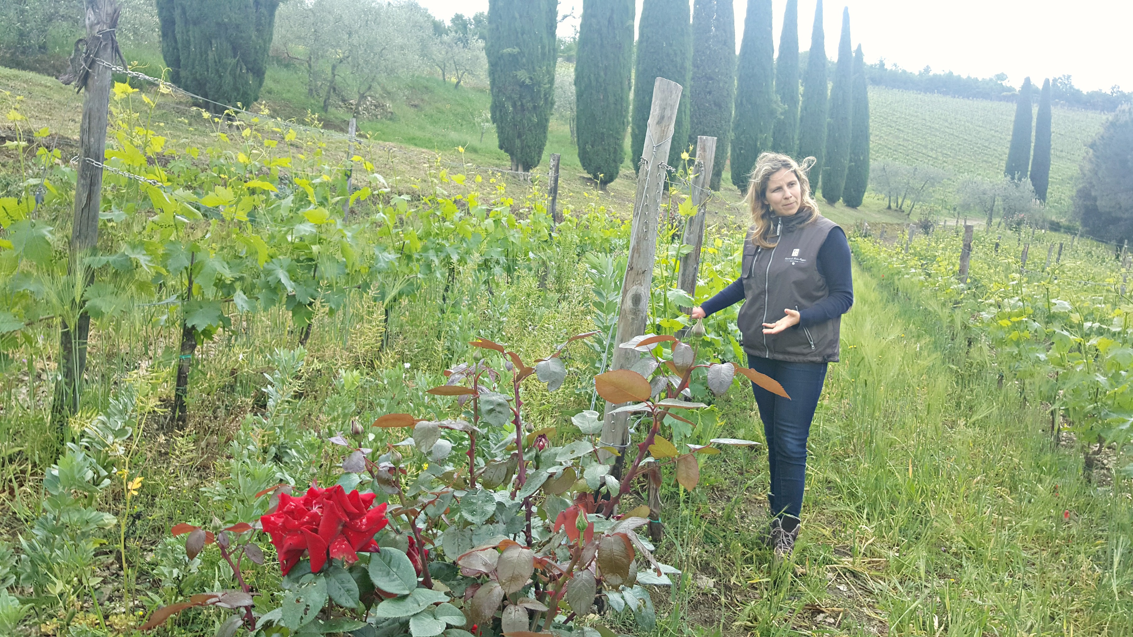 Organic Farming at Montemaggio