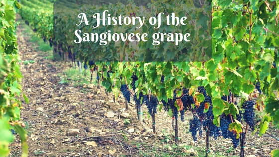 A History of the Sangiovese grape