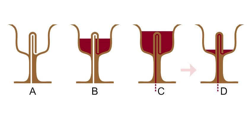 Pythagorean wine cup