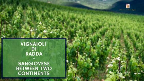 Vignaioli di Radda - Sangiovese Between Two Continents