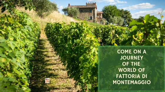 Come On a Journey To the World of Fattoria di Montemaggio in Chianti Region
