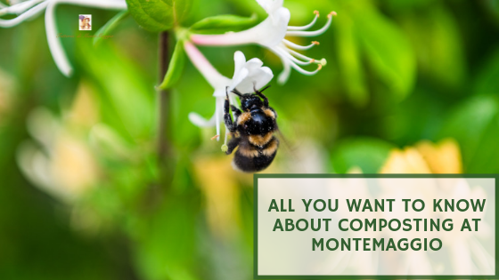 All You Want to Know About Composting at Montemaggio