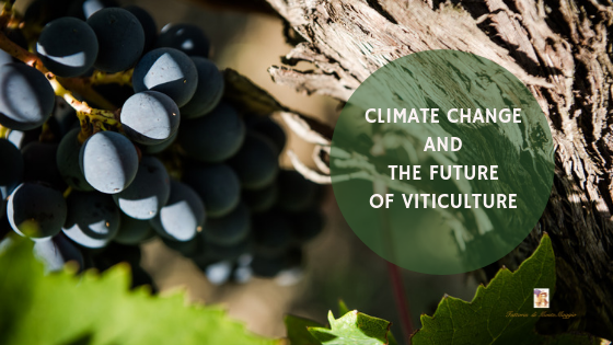 Climate Change and the Future of Viticulture
